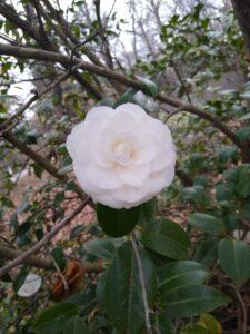 image of flower